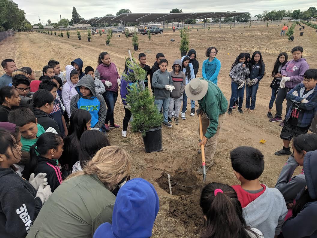 Tree Fresno 1